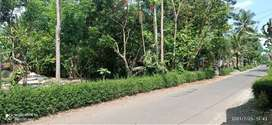 Tanah pekarangn pinggir jalan kabupaten luas tanah 313m²,LD 10,5M