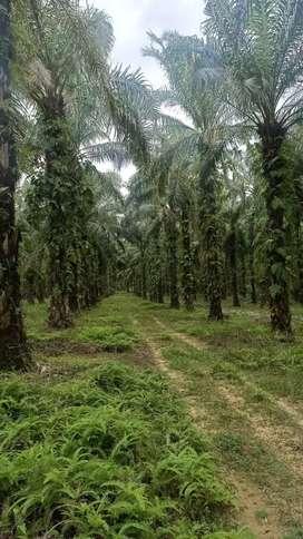 Tanah Untuk Lahan di Riau