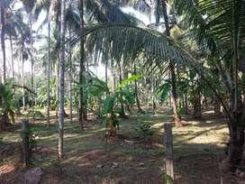 Ponnukara thrissur land for sale (49cents)