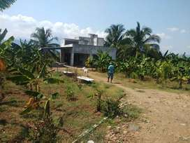 Agricultural Land(12.5 acres) with coconut trees for sale in karamadai