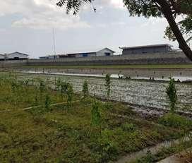 Dijual Tanah Kawasan Industri Pilangkenceng Madiun Ngawi-Caruban