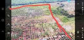 DIJUAL Tanah Kebun Sawit + Ruko Sarang Walet 4½ lantai