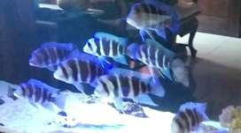 Di jual ikan bisa sama aquariumnya