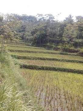 Tanah Darat + Sawah Pinggir Jalan Dijual Murah di Darangdan Purwakarta
