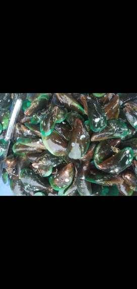 Kerang hijau stok ready fresh dari laut