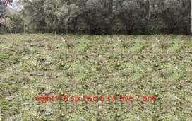 Land for sale at Jorhat Charingia - 3.5 Katha