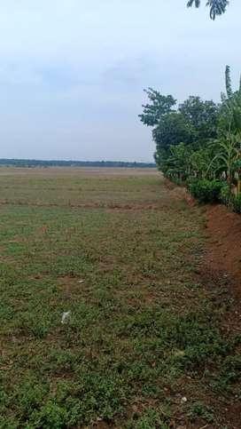 Dijual tanah 2.000 ha Cipunagara Subang - Jawa Barat