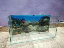 FISH TANK (24×7×12.5)