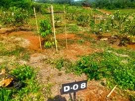 kebun buah menghasilkan pasive income