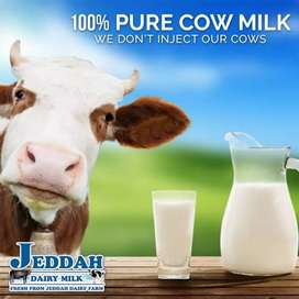 Pure cow milk 100%