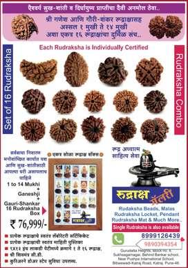 Set of 16 Antique Rudraksha