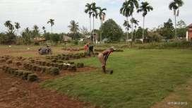 Jaul Rumput Taman Harga Grosir
