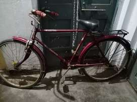 Adult male bicycle