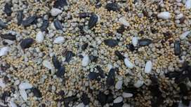 Mix seeds for birds