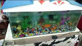 "Fish Aquarium Along with ""cap"" and ""Oxygen"""