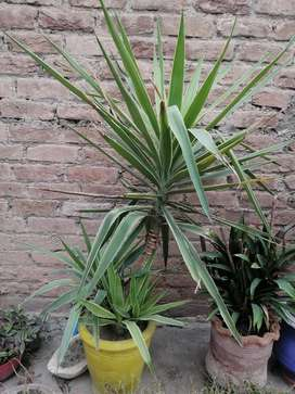 Mir plants with planters