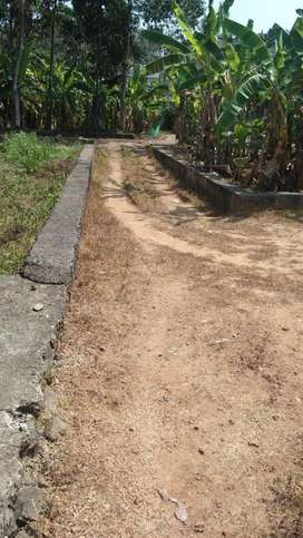 Independent plot near chottanikkara