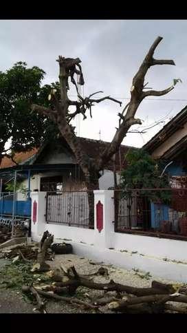 Mengerjakan tebangan/Pangkas pohon dan pembersihan Lahan JABODETABEK