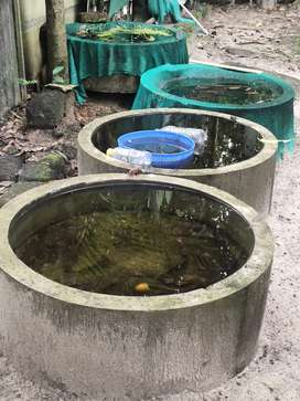 Fish tank & water tank