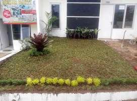 Tukang pembuatan taman rumah-jual tanaman hias dan tanaman pelindung