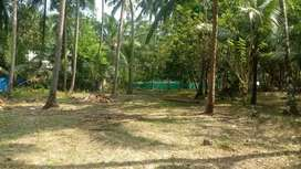 Land rich in coconut tree is for sale