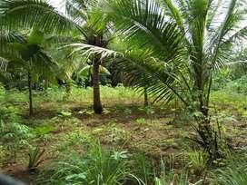 Tanah Kavling Dijual 4 juta per bata, bisa dijual sebagian luasnya