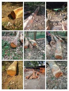 All types of woods
