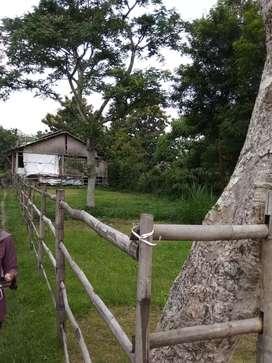 BU Dijual cepat Tanah milik pribadi, daerah Blabak - Kota Kediri