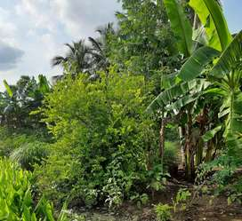 2 acre Agricultural land for sale (farm house)