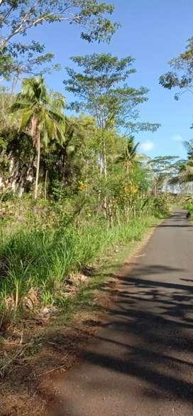 Lahan dijual murah keluasan ± 30 hektar