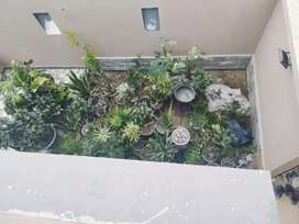 Dha 500 Sq Yards West open Bungalow Portion For Rent