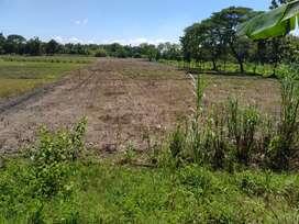 Tanah Bagus Zona hijau ( pertanian ) Luas .2 ha. Karangdowo.klaten