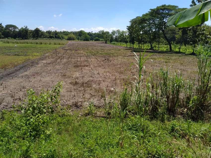 Tanah Bagus Zona hijau ( pertanian ) Luas .2 ha. Karangdowo.klaten 0