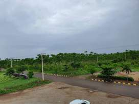 Sandalwood plantation farm land plots at shankarpally