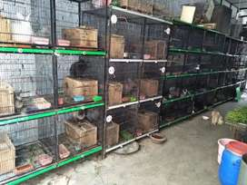 Fancy Imported Rabbits Complete Range Whole Sale Price