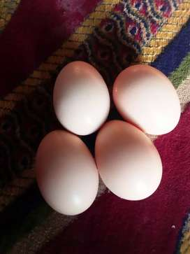Hen Eggs with 20% off