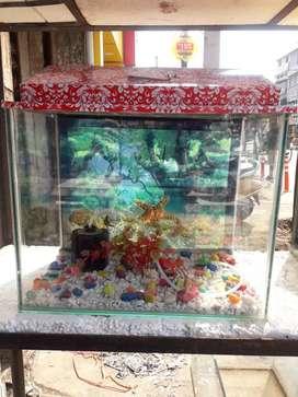 Aquarium Aqua Gallery