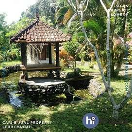 Tanah kebun di Suranadi Narmada Lombok barat T412