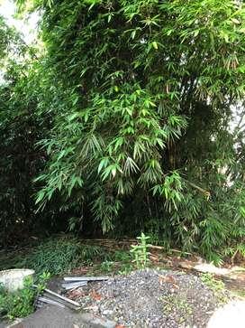 Jual bambu borongan murahhh
