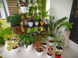Quality indoor plants potted and unpotted