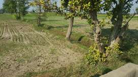 Agriculture land Faisal Abad (Chak110 GB)