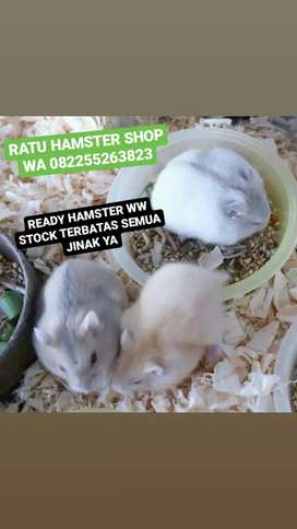 Hamster Whinter Whinte aneka Corak Warna mulai 60rb/ekor