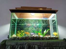 Medium size aquarim