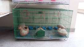 2 MASTER CAGE And 1 medium size cage Available