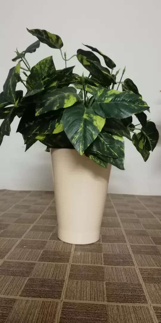 Flowers and Vases(cheapest price)