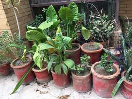 Beautiful plants for home