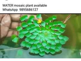 Water mossaic aqua plants