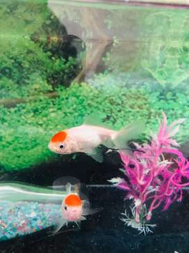 Aquarium for sale with all equipments and medicines