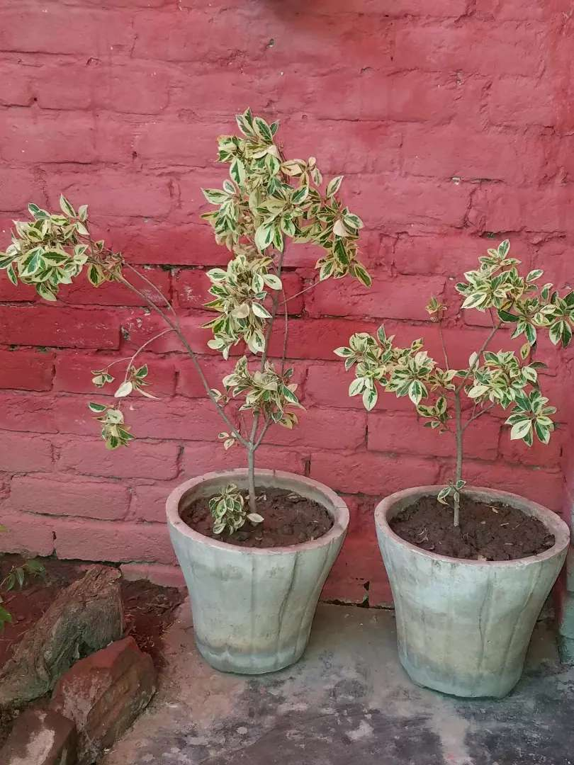 I am sale plants with gamlay 0