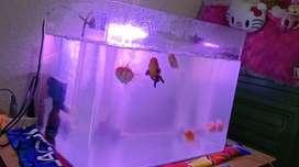 Aquarium aquascape bending import glass tank recent